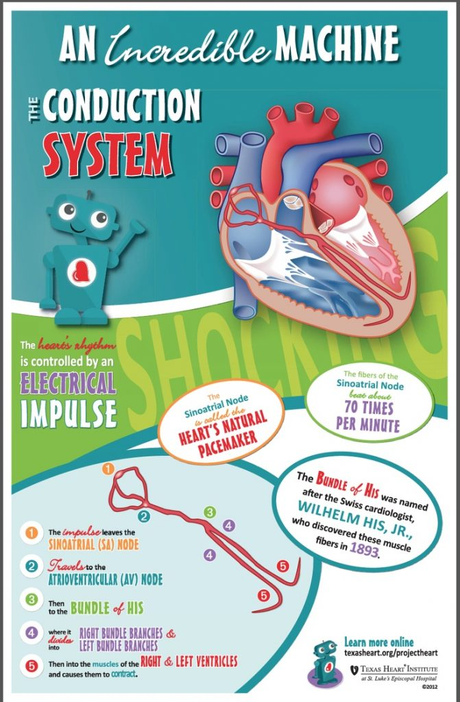 The Conduction System